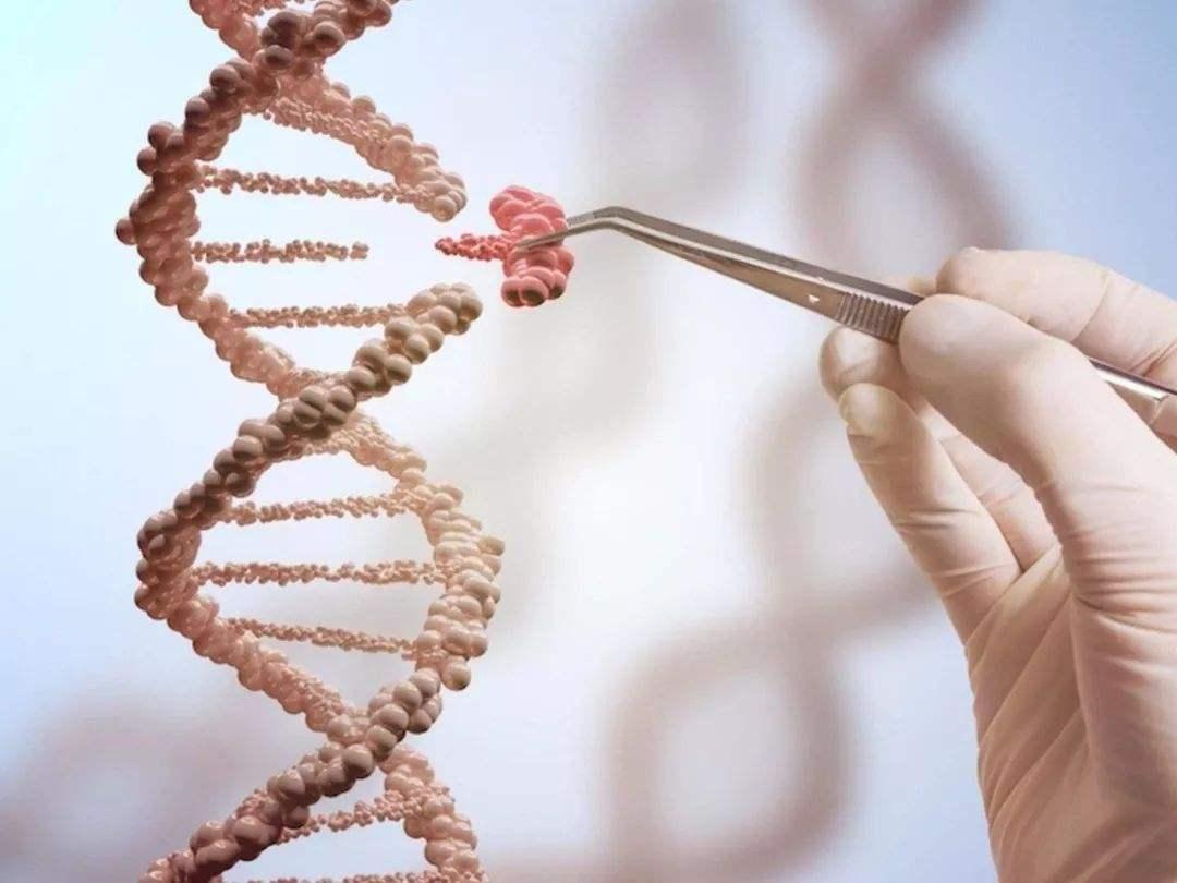 世卫组织呼吁建立基因编辑登记处.jpg