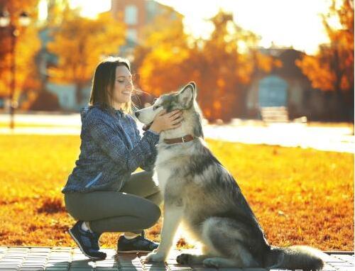 人类为何能与狗和睦相处?.jpg