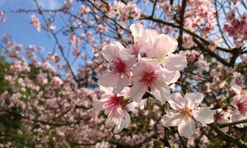 百花盛开春来到.png