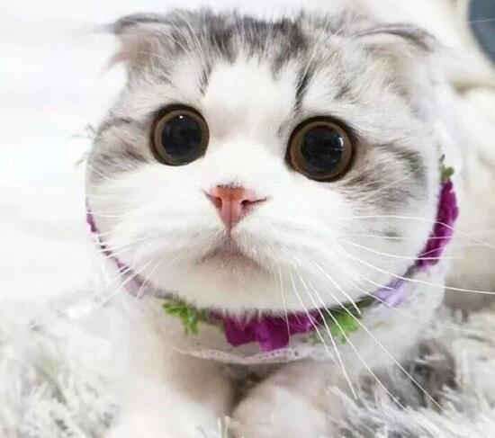 猫能听懂自己名字.jpg