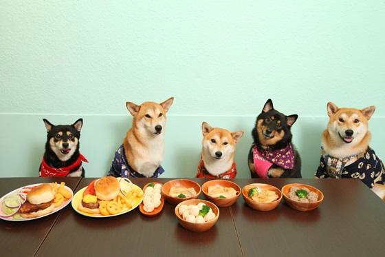 越来越多的美国宠物吃新鲜食物.JPG