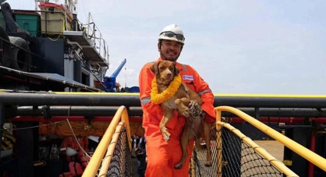 """泰国小狗""""海漂""""220公里后获救.jpeg"""