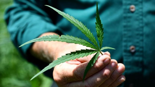 中国工业大麻(2).jpg