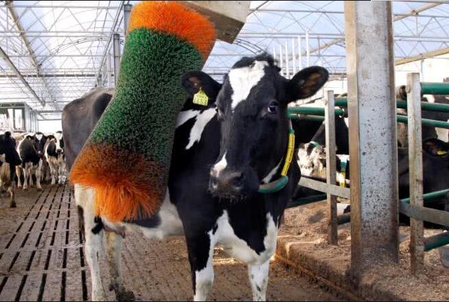 奶牛成为英国首批5G用户.jpg