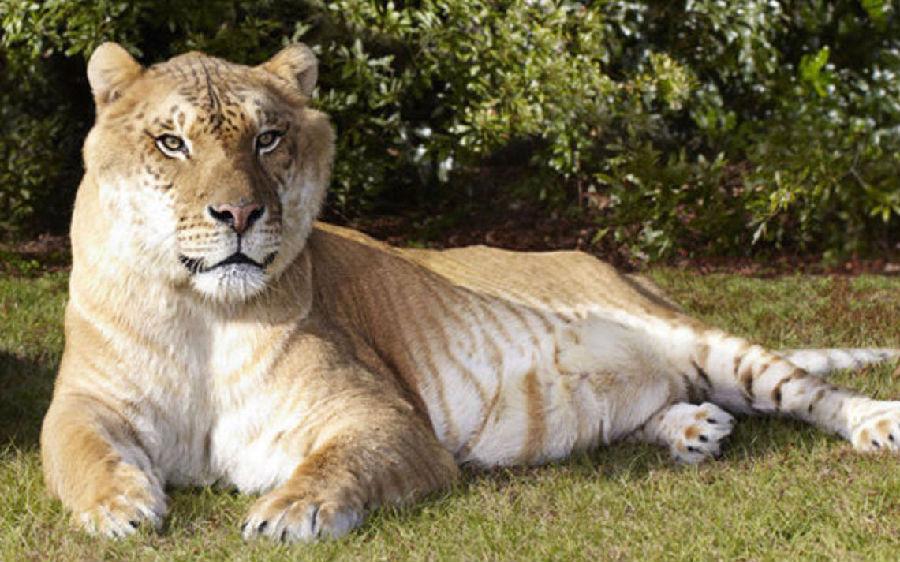 肯尼亚疑出土史前巨狮遗骸.jpg