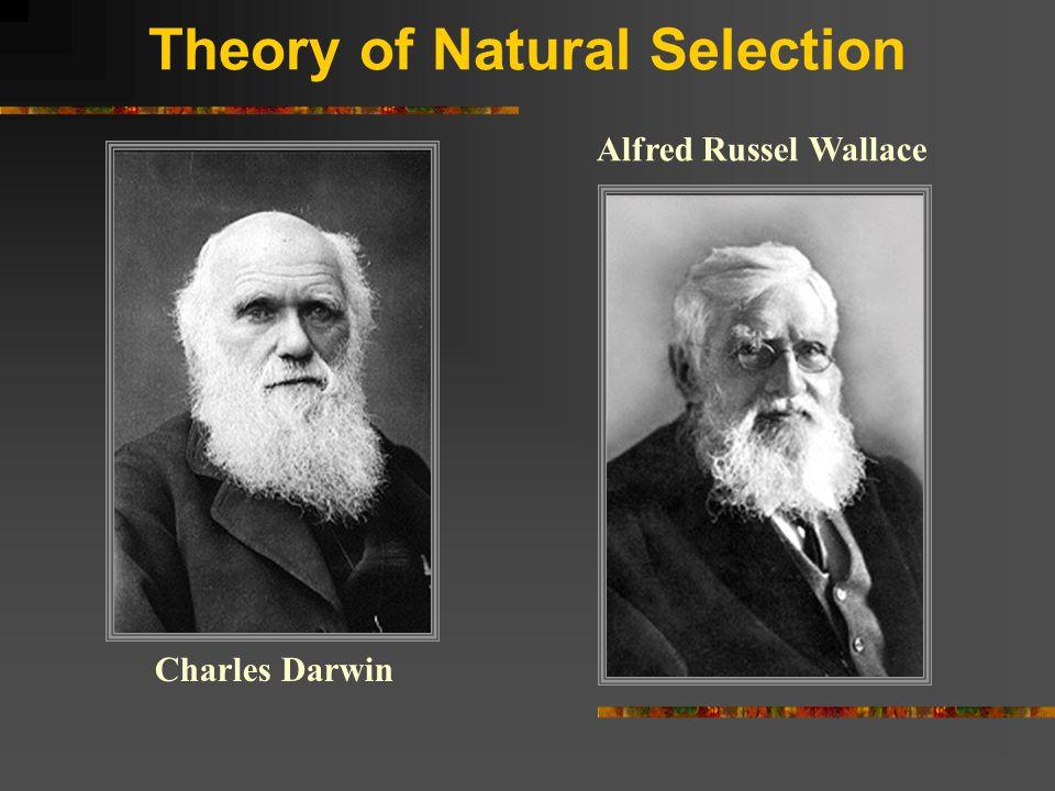 达尔文与华莱士