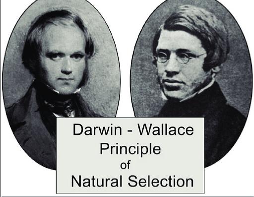 達爾文與華萊士