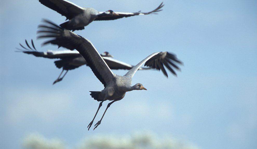 鸟类观察者和居民帮助鸟类迁徙.jpg