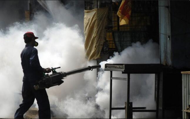 世卫组织:登革热感染人数上升.jpg