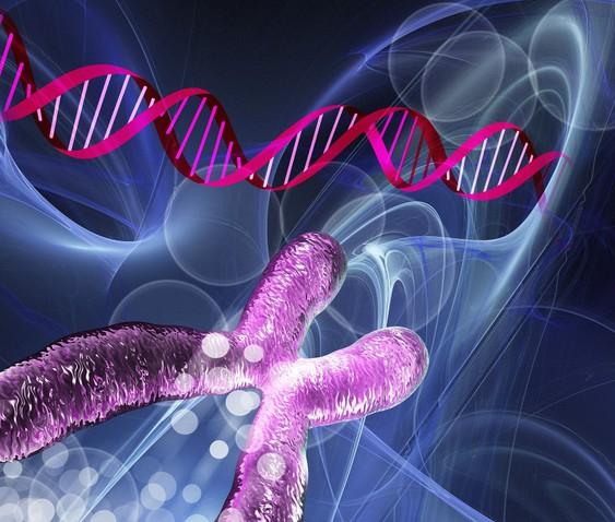 """智商可预测,未来试管婴儿将可选择""""最聪明的""""胚胎.jpg"""