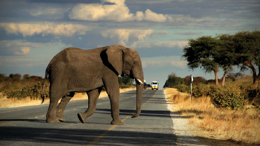 津巴布韦欲出售6亿美元的象牙.jpg
