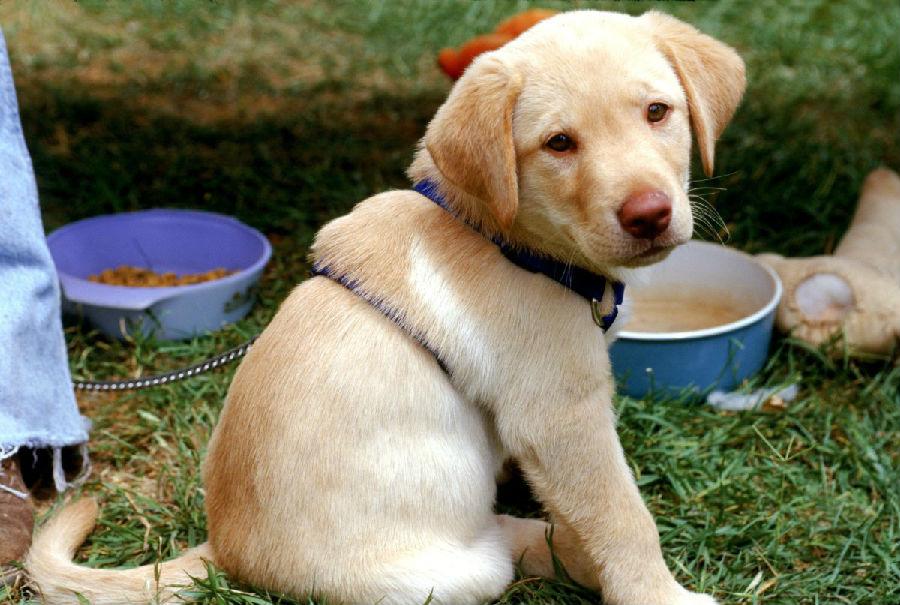 报告发现 喂狗狗的食物可能会让你生病