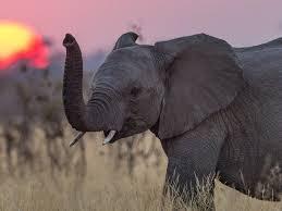 Endangered specie.jpg