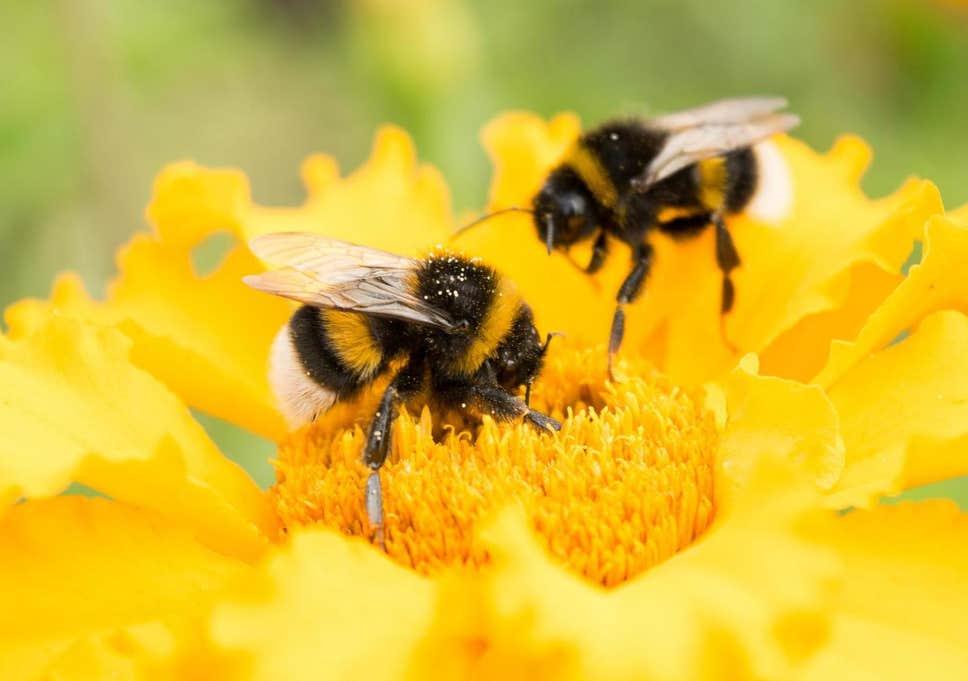 蜜蜂的演化