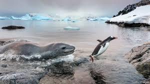 收拾一只企鵝.jpg