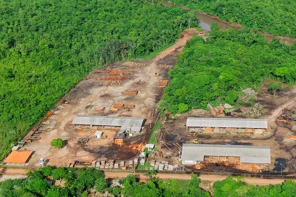 熱帶雨林.jpg