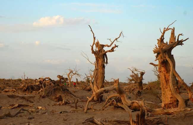 气候变化:一场我们必须打赢的比赛.jpg