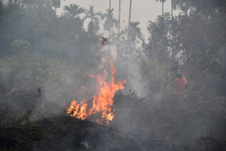 印度尼西亚发生多起森林火灾.jpg