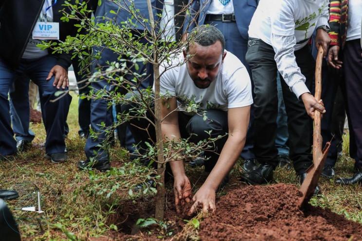 埃塞俄比亞12小時內種植數億棵樹.jpeg