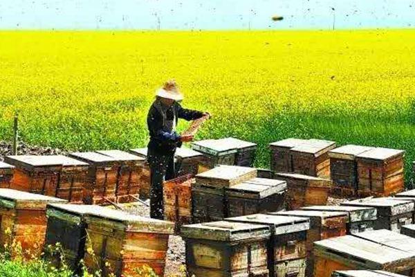 养蜂.jpg