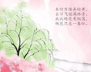 9杨花.jpg