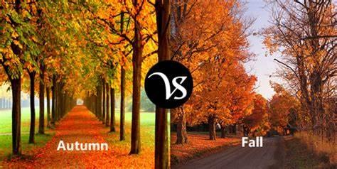 為什么美國人把秋天叫作fall?.jpg