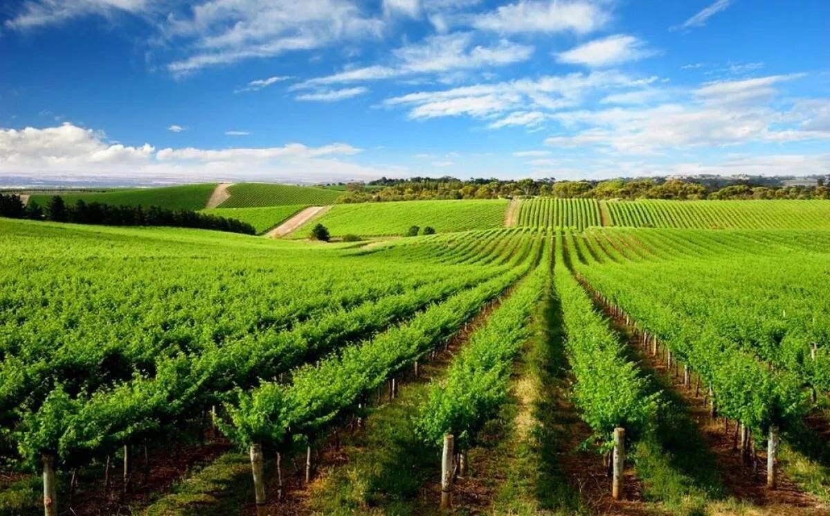 绿色发展赢得共识,创造机遇.jpg