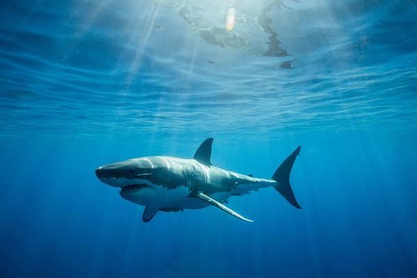 海洋獵手-鯊魚.jpg