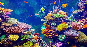 Coral reefs.jpg
