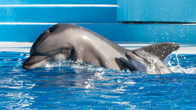 猫途鹰停止出售海豚表演门票.jpg
