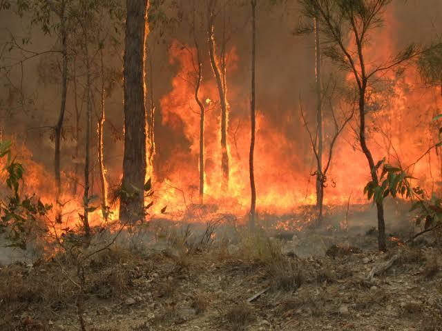 澳大利亚志愿消防员被控蓄意纵火.jpg