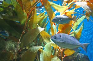 吃不同种类海藻的鱼类