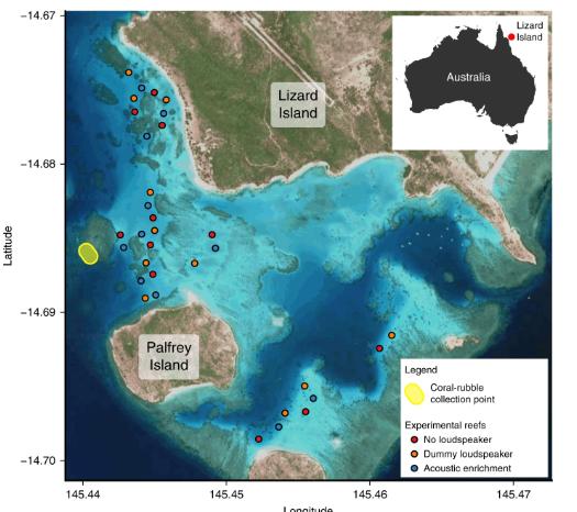 研究人员使用水下扬声器将幼鱼吸引到大堡礁.png