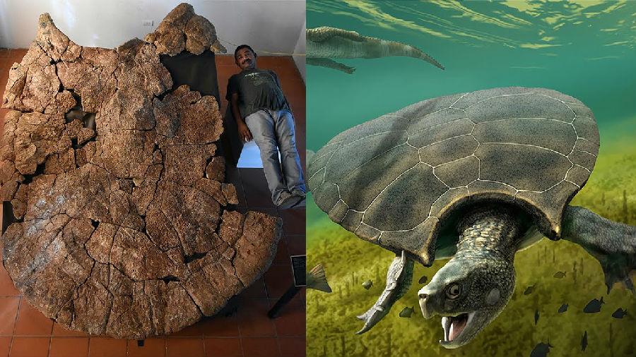 古生物学家发现已灭绝巨型乌龟化石.jpg