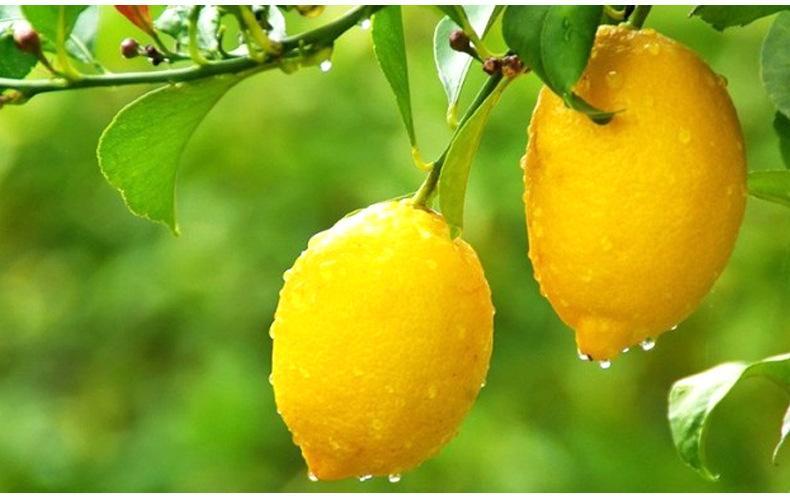 如果生活给了你一颗酸柠檬.jpg