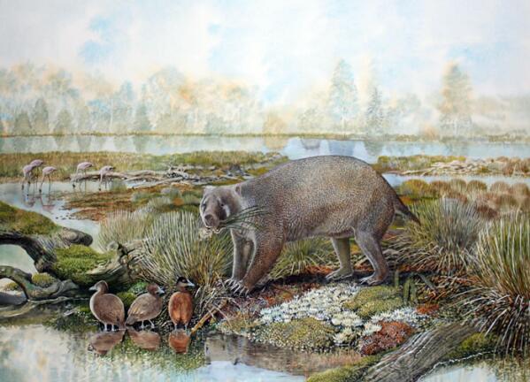 澳大利亚发现神秘新动物化石.jpg