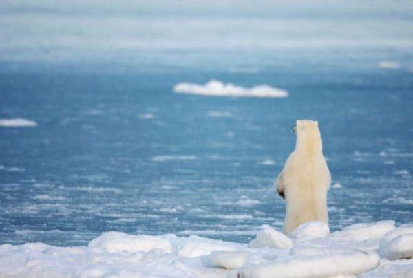 联合国预测未来5年气温.jpg