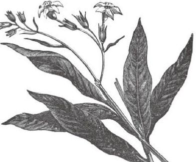 雷利爵士的两种植物