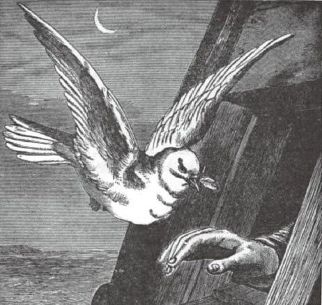 方舟與鴿子