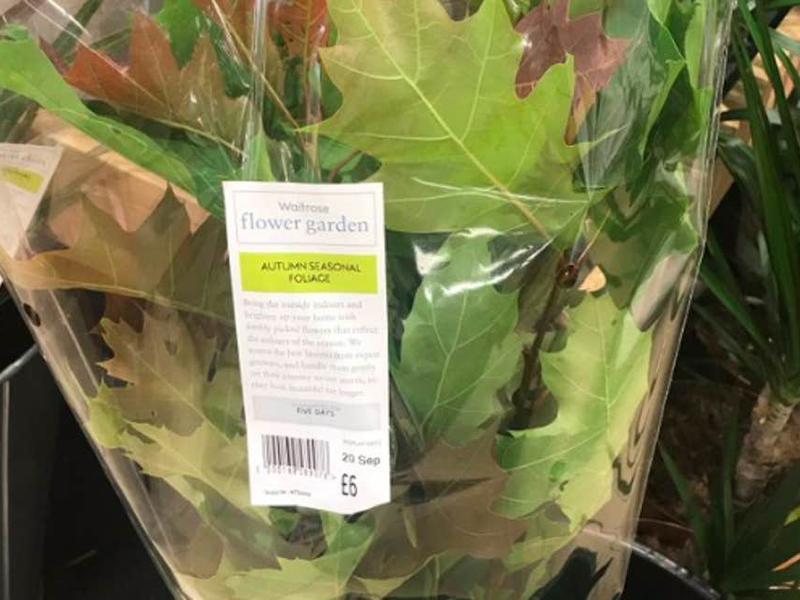 英国连锁超市卖秋天树叶.jpg
