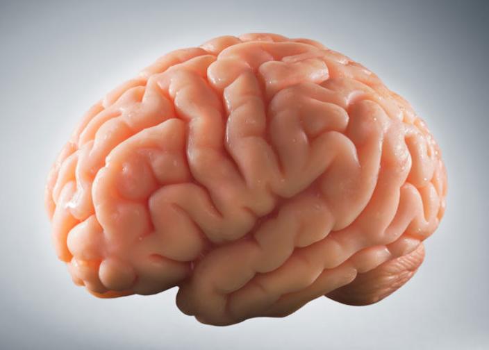 大腦是個用進廢退的系統