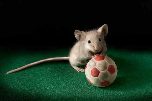 老鼠.jpg