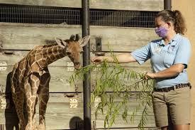 伦敦动物园因疫情封锁陷入困境.jpg