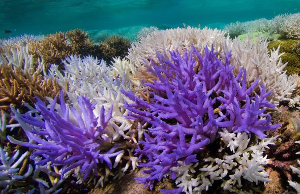 珊瑚白化.jpg