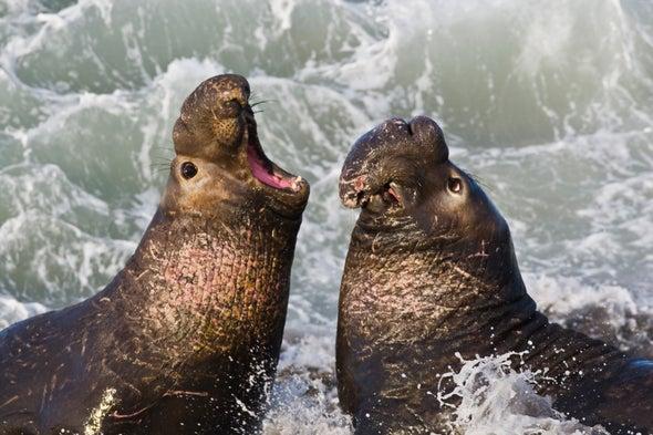 海豹.jpg