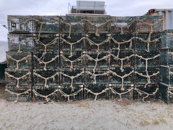 龙虾捕笼.jpg