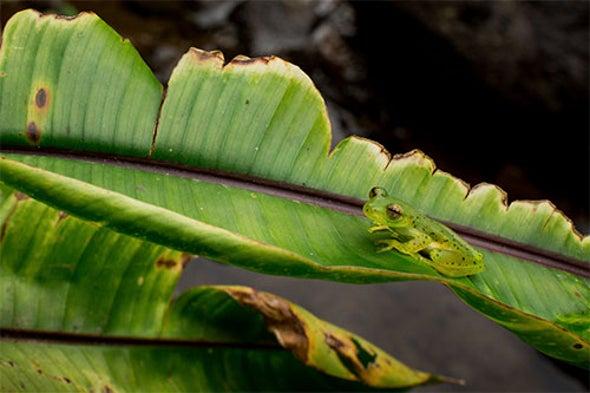 透明蛙.jpg