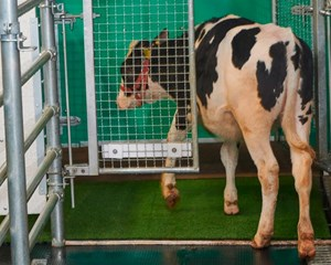 210913105035-01-toilet-training-cows-study-super-tease_副本.jpg